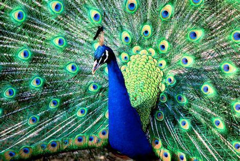 10 amazing blue things that occur in nature – Create Amaze