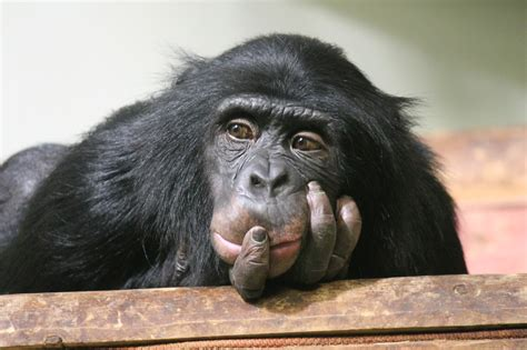 Minds of Their Own: Animal Intelligence | California