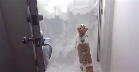 Cat Bravely Takes On Wall Of Snow Outside His Front Door